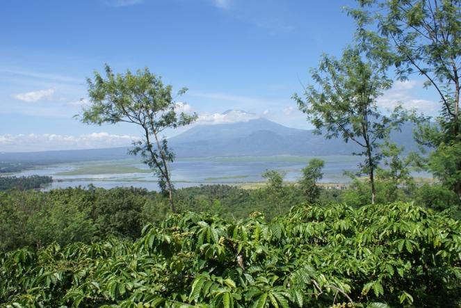 Pemandangan di Kampoeng Kopi Banaran