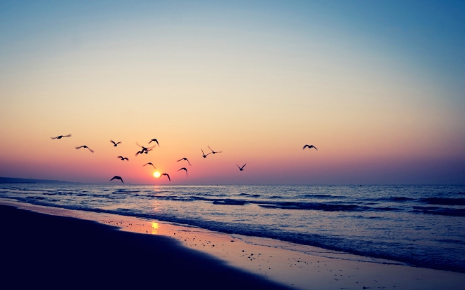 sunset-birds-sea-nature
