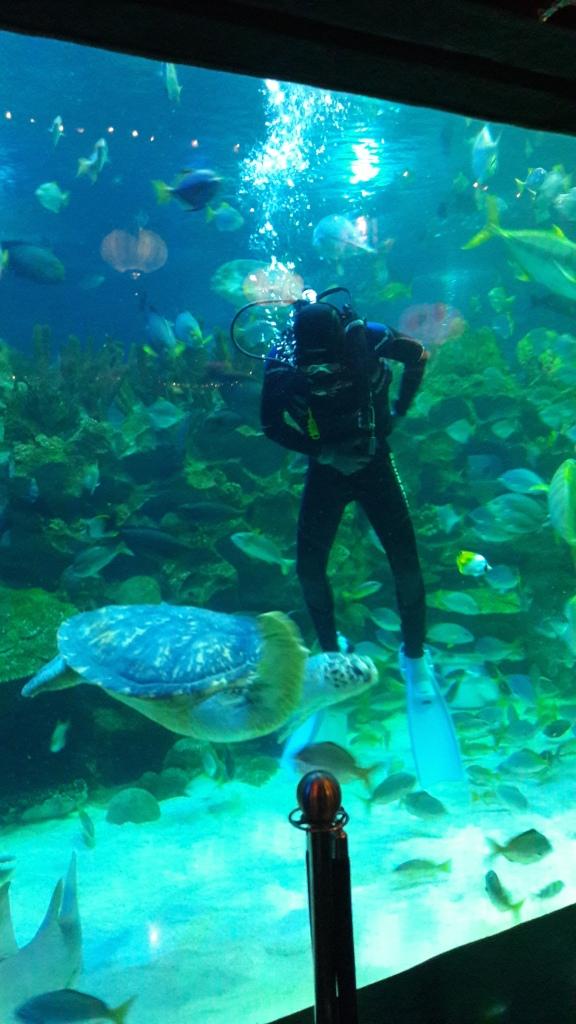 aquaria10