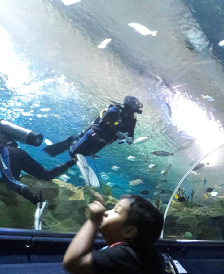 aquaria13