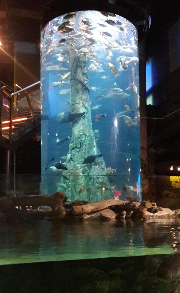 aquaria17