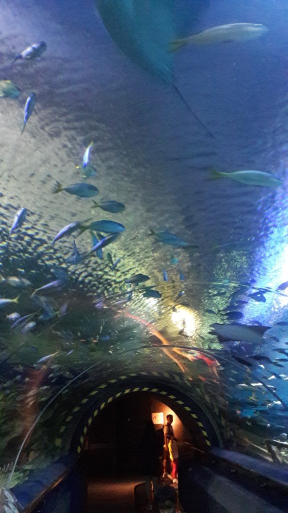 aquaria5