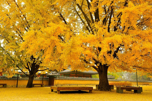Gyeongbokgung-Palace-in-South-Korea-During-Autumn
